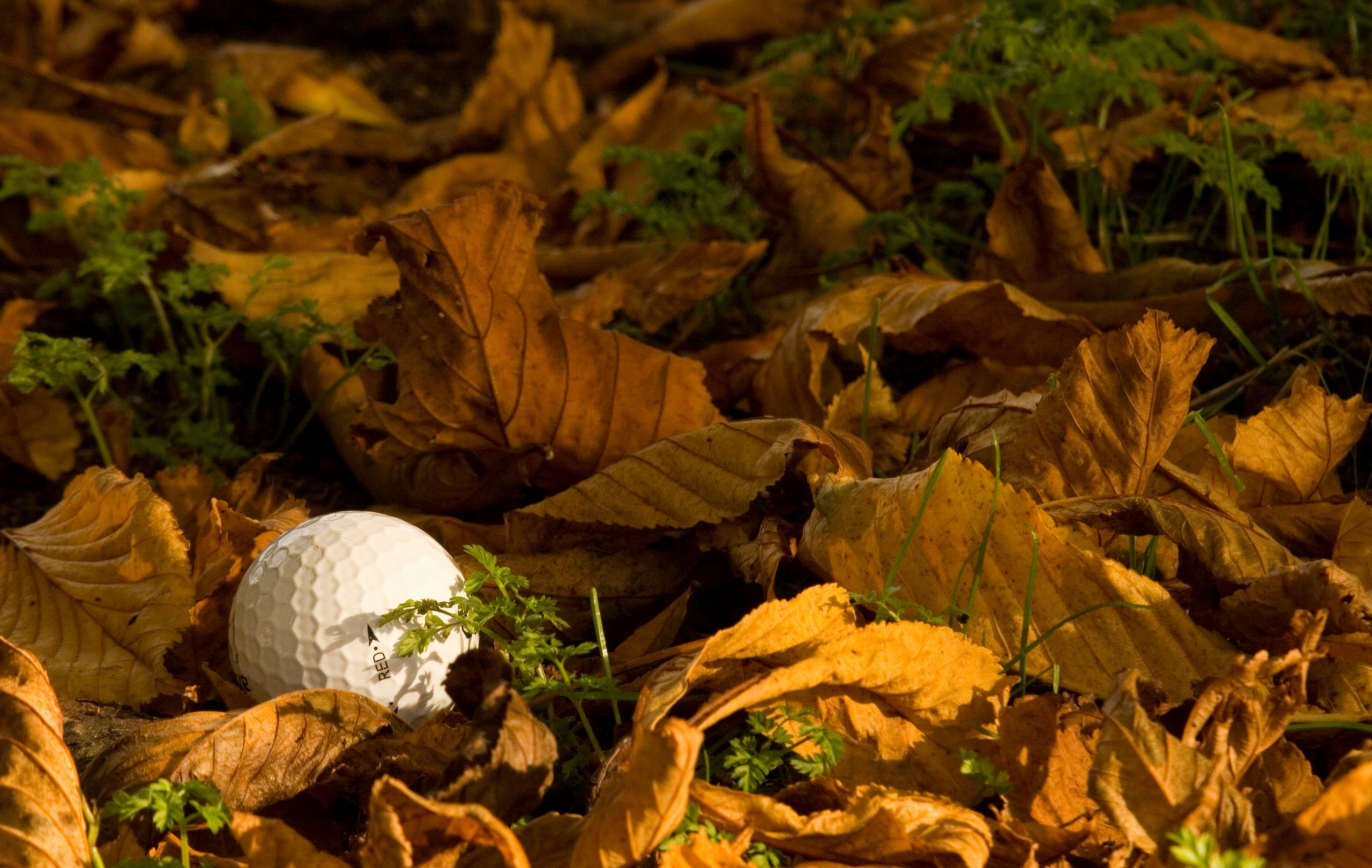 Golf ball lost in the rough